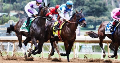 شراء خيول سباق للمبتدئين